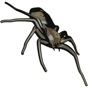 rotated-spider-small